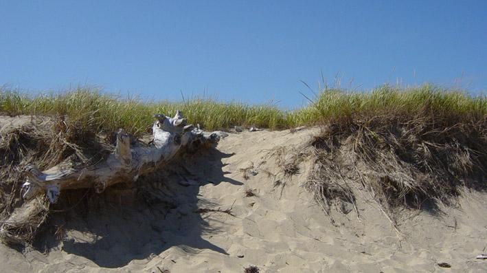 dunes cape cod